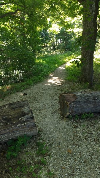 The trail is a 4-mile loop - you can go left or right at this point.
