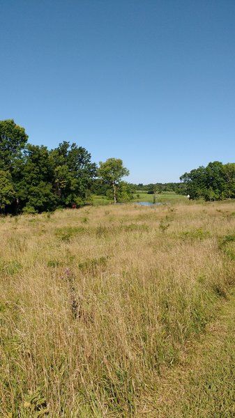 Prairie with a view of lake.