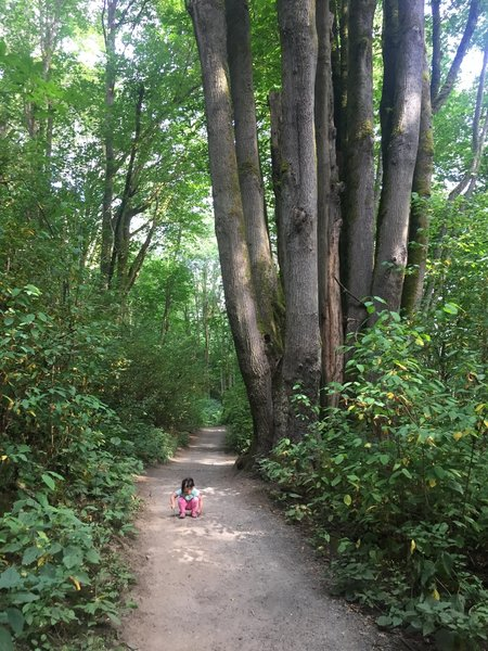 Great trail for running or for kids!