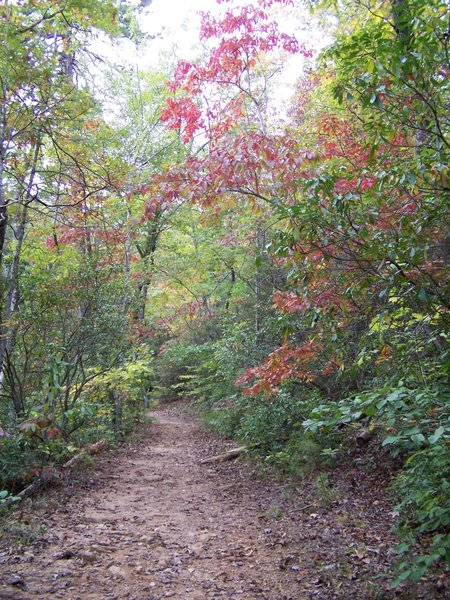 October trail run Paris Mountain Greenville, SC.
