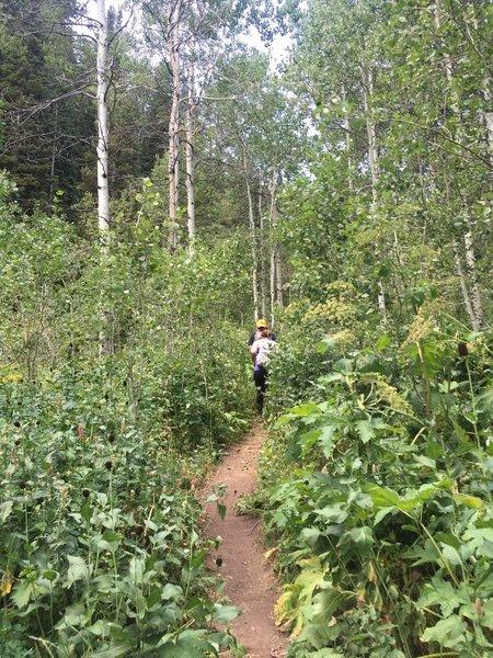 Heading up the trail through mixed vegetation.  Photo on Aug 2, 2016