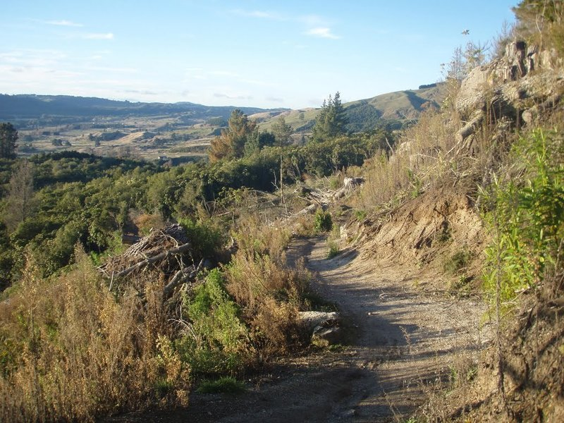 A typical section of the trail ascending out of Kinloch.