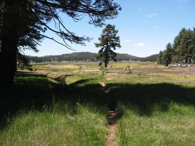 Laguna Meadow from the Chico Spur Trail.