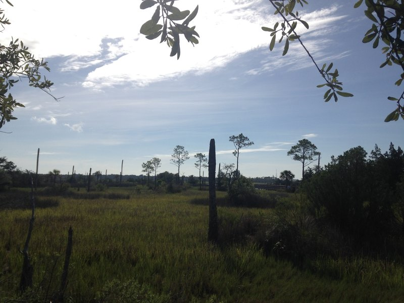 A view of the marsh with sparsely-leaved tree remnants.