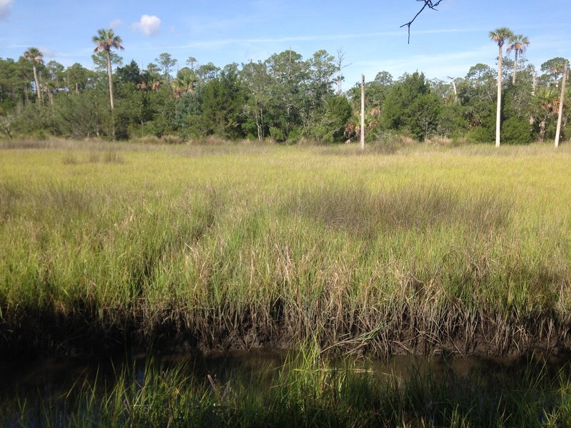 A view of the marsh with a small 'moat' in the foreground and various flora in the background.