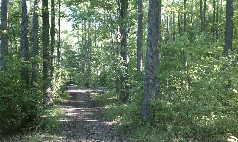 Parts of the trail as you transition around the pond which offers a wider running/biking area.