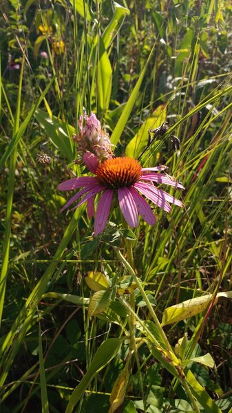 Wildflowers along the path.