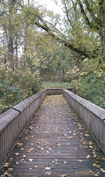 Forest boardwalk.