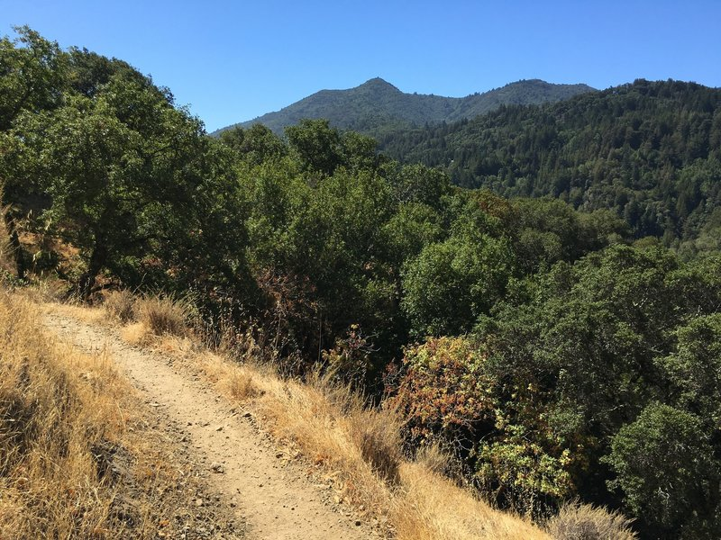View of Mt. Tam from the Yolanda Trail.