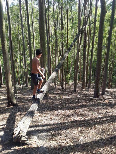 Na Trilha dos Eucaliptos - On the Eucalyptus Trail.