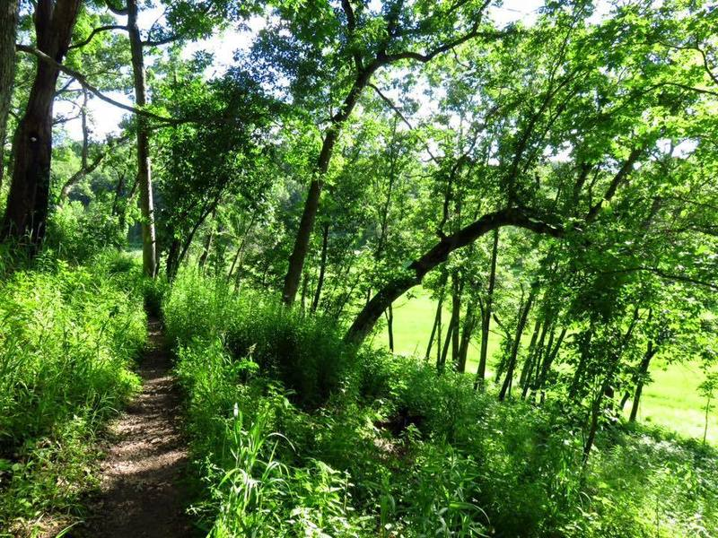 Love this segment of the Ice Age Trail. So green in the summer of 2016
