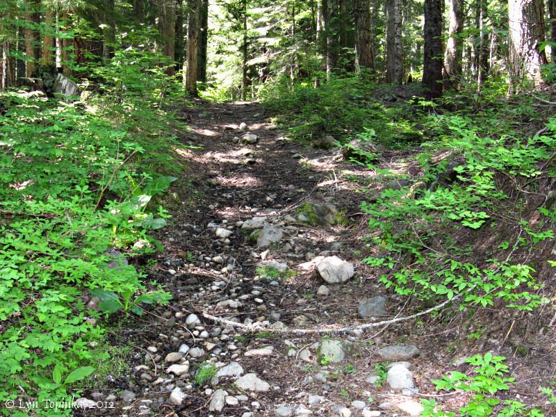 Barlow Trail - part of the original Oregon Trail.  Photo by Lyn Topinka