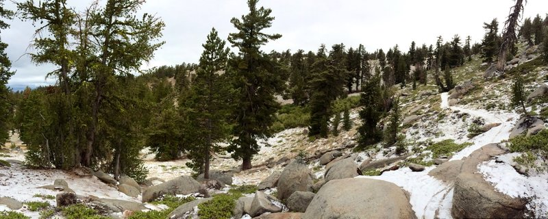 First snow of the season along the Tahoe Rim Trail.