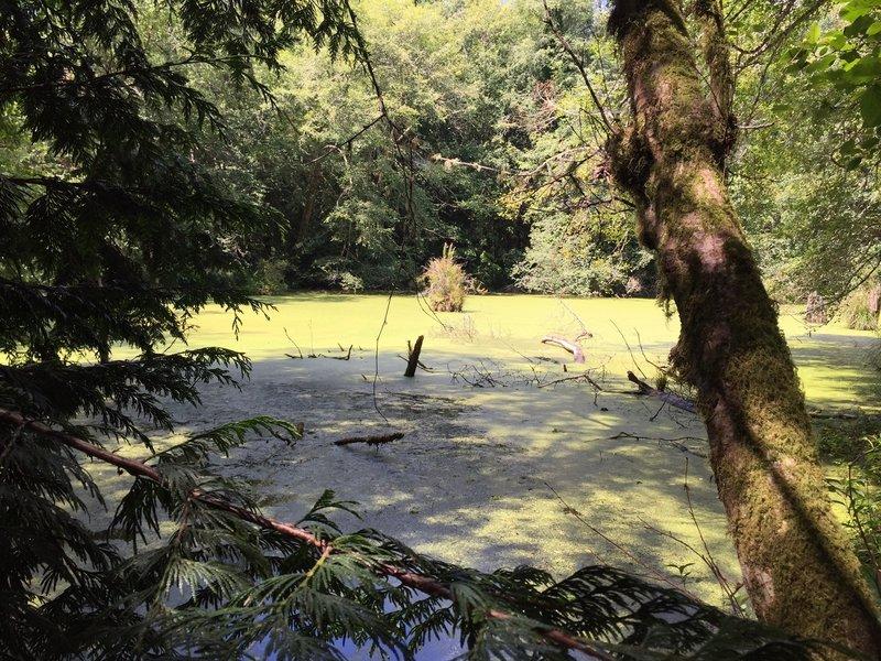 Small pond.