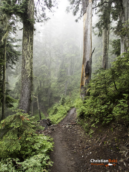 We had hoped for clear skies and majestic views of Mt. Baker, but I have to say this fog and rain was pretty cool too.