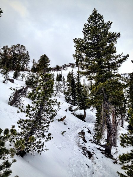 Trekking pole pock marks guide your path on a winter ascent of Mt. Rose.