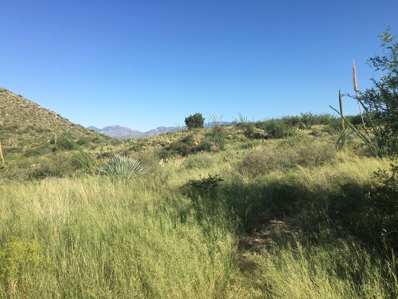 The trail begins with a slight incline with an assortment of vegetation and wonderful views of the valley.