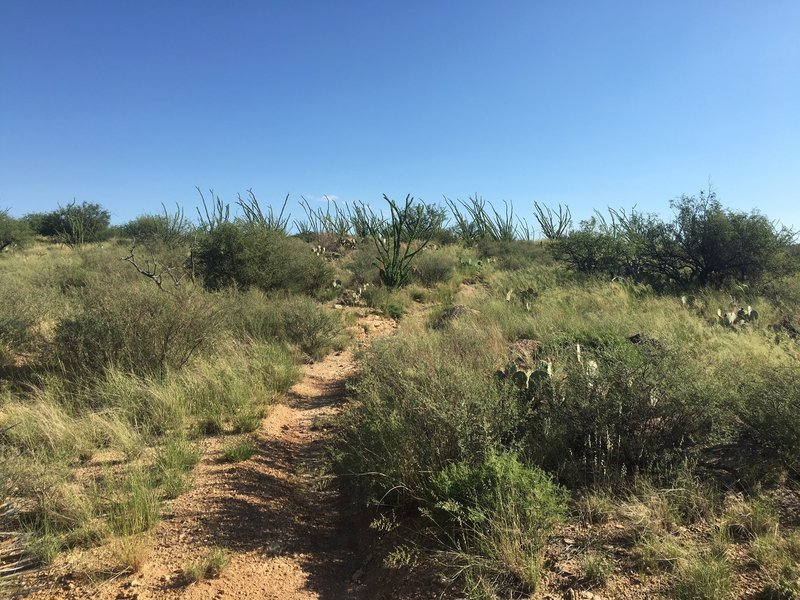 Vegetation varies from mesquite, ocotillo and creosote, to pricklypear and cholla cactus, to various grasses and flowers.