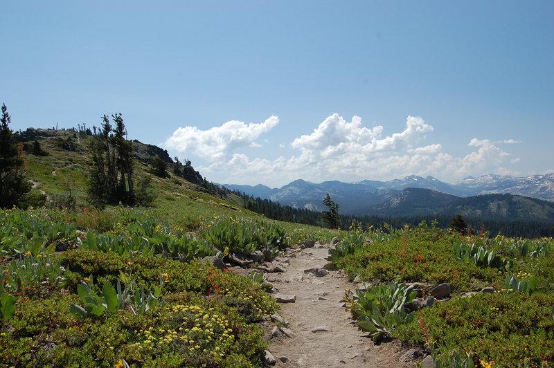 The Ellis Peak Trail winding along an alpine ridge-line.