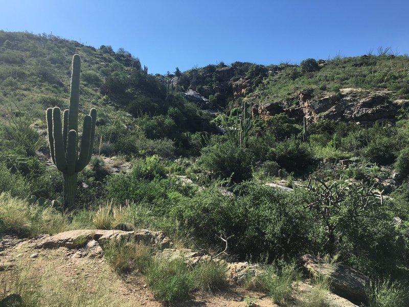 A view looking up at Bridal Wreath Canyon.