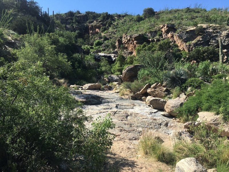 The trail winds around the hillside and enters into the wash. From here you make your way up the slick rock to the falls.