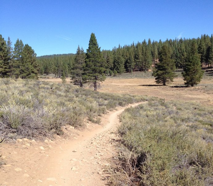 High meadow along the Emigrant Trail.
