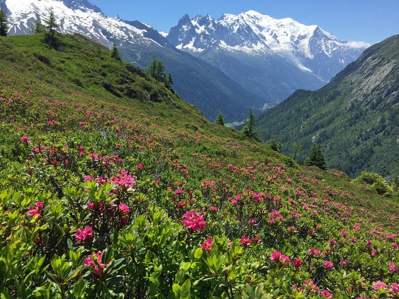 Mont Blanc from the Aguillette des Posettes