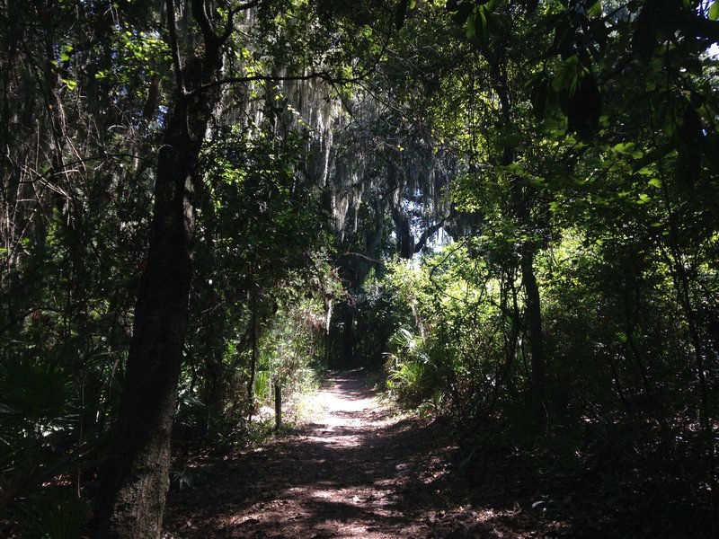 The canopy overshadows the trail for much of the way.
