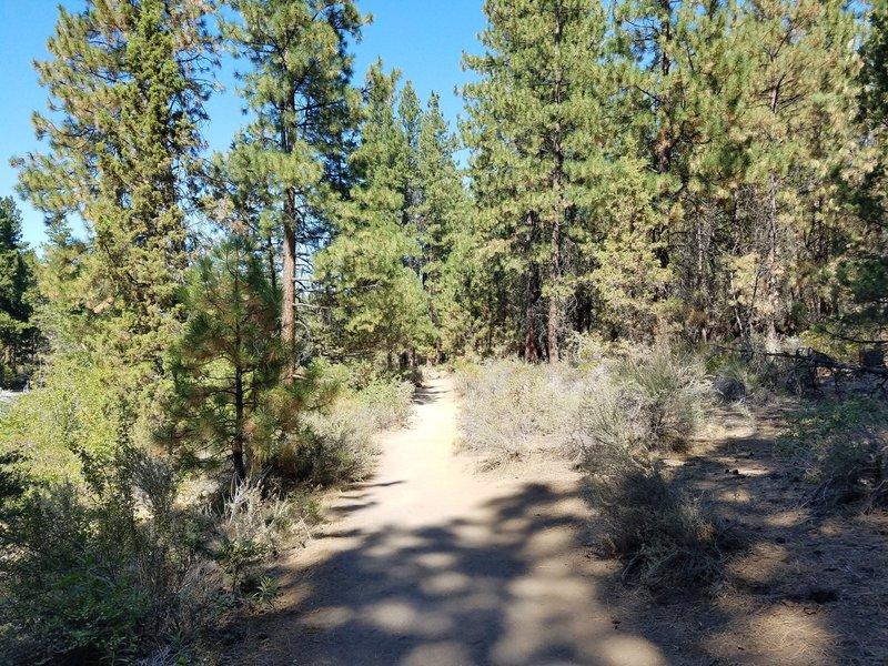 Easy family friendly trails