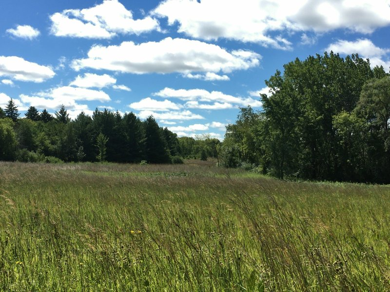 View facing south from bench along prairie path. Spring Valley Nature Center 8/21/16