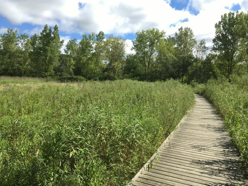 Boardwalk through prairie/marsh. Spring Valley Nature Center 8/21/16