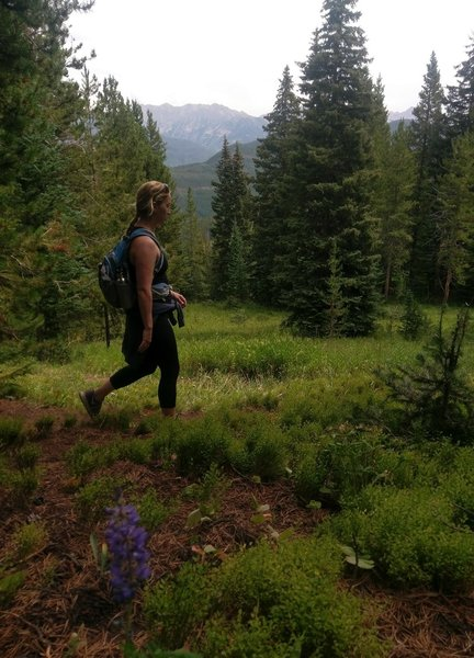 On a sparsely forested section of the Meadows Loop, just above Mid-Vail