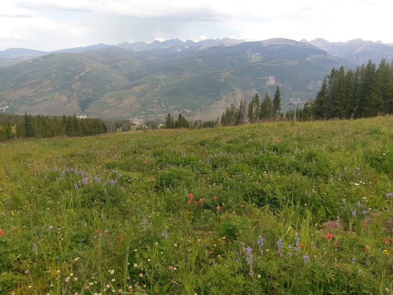 Vail's classic alpine meadows with copius wildflowers and the distant Gore Range as backdrop