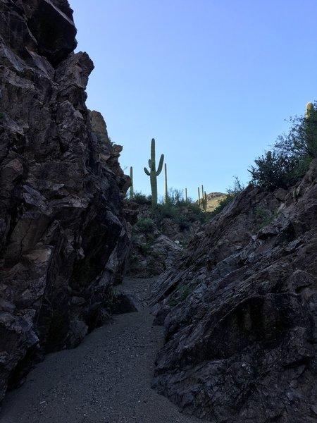 Narrow spot along the Brittlebrush trail.