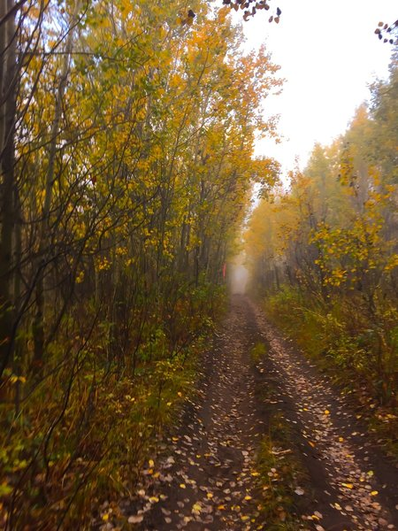 The southern out and back trail takes you through the golden quaky aspens during the fall.