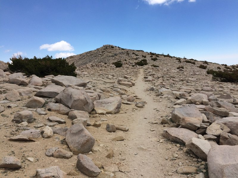 "Approaching the summit of San Gorgonio Mountain, a.k.a. ""Old Greyback"""