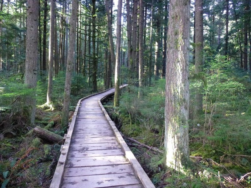 A boardwalk section of the Grand Ridge Trail.