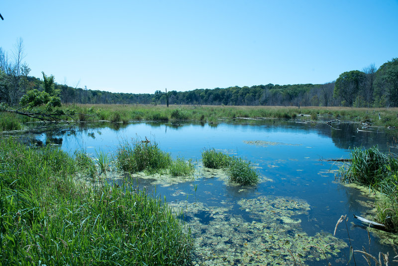 Part of the Lake Manitou wetland complex.