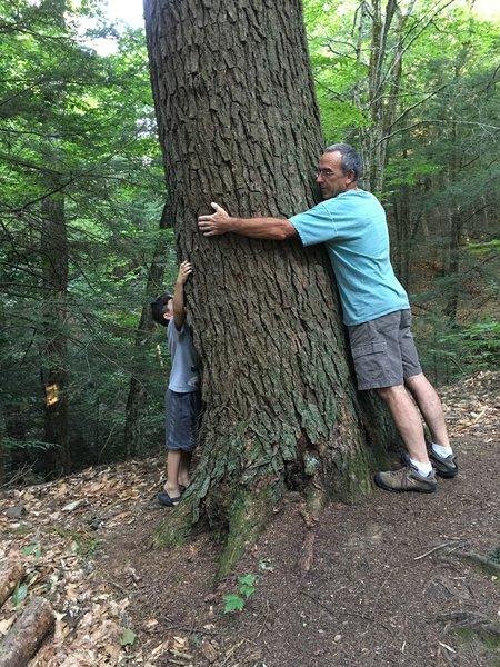 We love big trees!