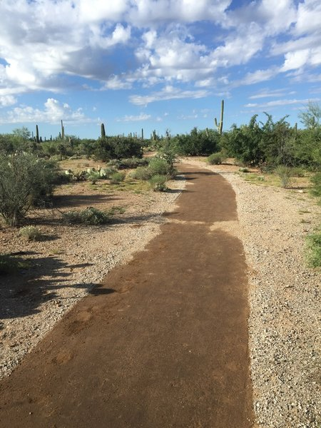 Mica View Trail got a makeover :) Hard pack trail without toe snubbers!