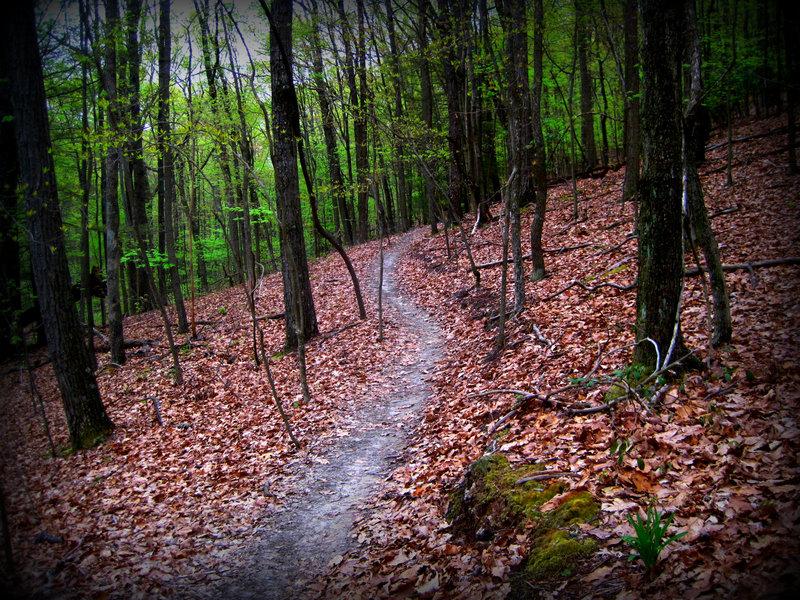 Chestnut Trail.