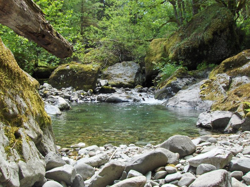 Cheeny Creek provides excellent salmon habitat along Bonanza Trail.  Photo by USFS.