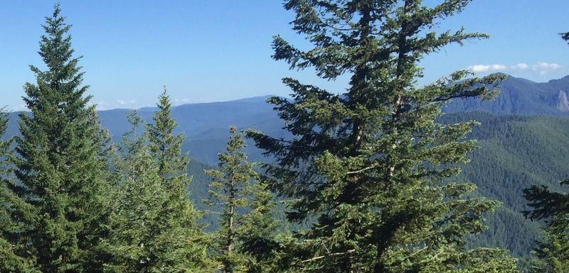 View on Bonanza Trail.  Photo by William Reynolds.