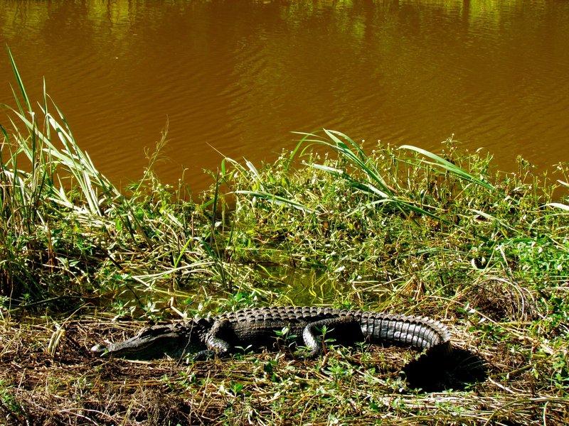 One of the Savannah Wildlife Refuge residents.