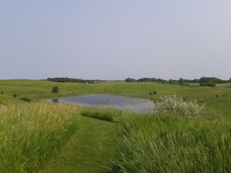Looking to the north out over the rolling prairie and the pothole wetland.