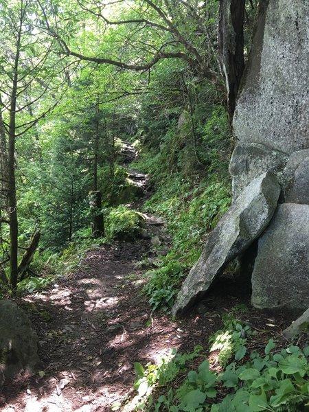 Trillium Gap Trail.