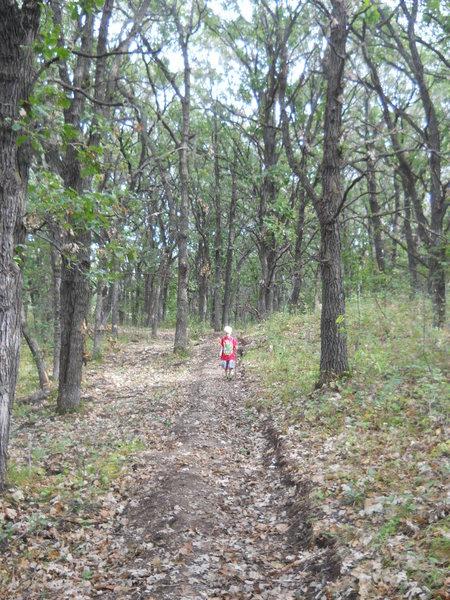 Hiking through the oak savanna portion of the trail.