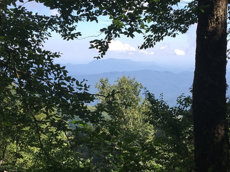 One of the very few views from the Trillium Gap Trail before reaching Mt LeConte.