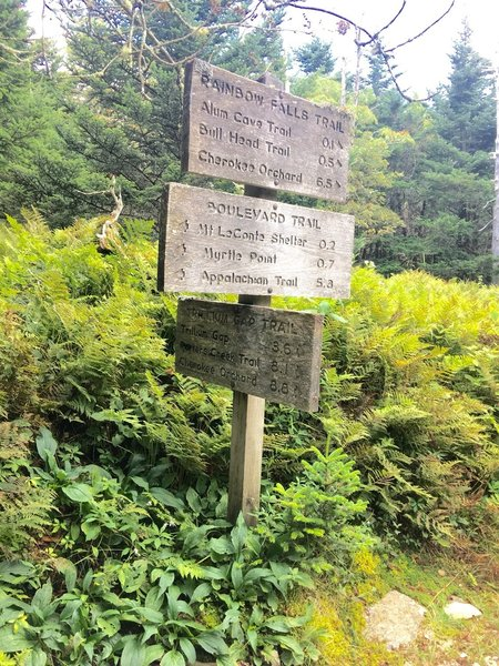 Trail Junction at Mt LeConte.