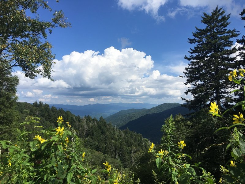 View from Newfound Gap parking lot.